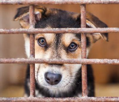 """Animal Legal Defense Fund Announces Resolution of Lawsuit Against Barkworks for Selling Sick """"Puppy Mill"""" Puppies"""