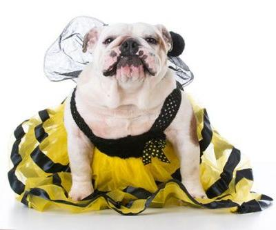 9 Things to Keep in Mind for Dog Halloween Costumes and Parades
