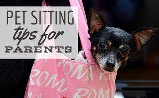 Dog Sitting Tips for Parents: How To Ensure The Best Care Possible