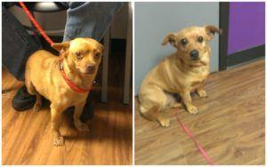 Thanks To You, Two Foster Dogs Have Full Bellies After Being Dumped On The Streets