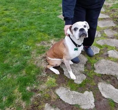 Volunteers Needed to Build Fences for Two Chained Dogs in Tacoma Area