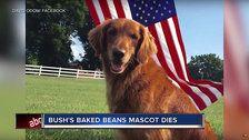 Dog That Played Duke In Bush's Baked Beans Ads Dies