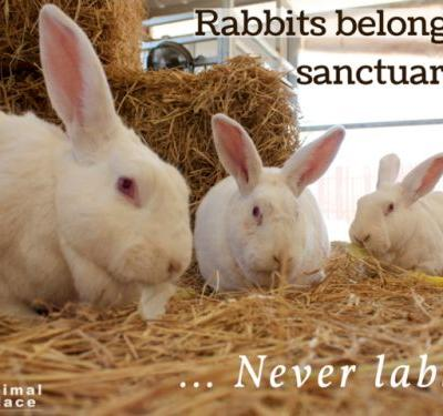 These three rabbits were rescued from a research lab in 2014