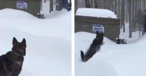 Brave German Shepherd Races To Save Her Trappped Pitbull BFF From Snow