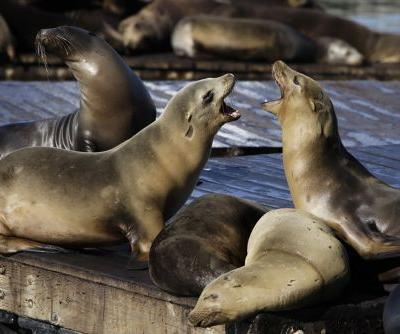 Sea lion attacks cause popular swimming spot to shut down
