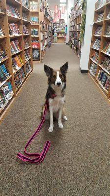 Guide to Socializing Your Pup in Dog-Friendly Stores