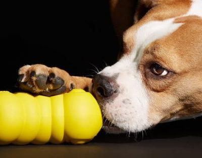 What Are The Most Durable Dog Toys?