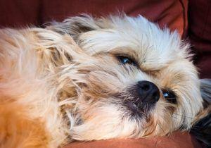 10 Common Skin Issues In Dogs