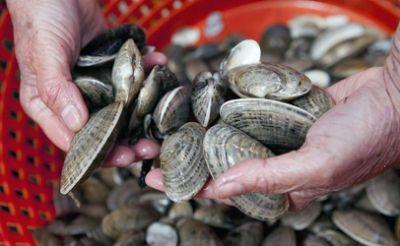 Shellfish harvests banned on both coasts because of toxins