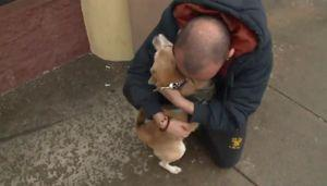 Veteran Is Elated When Stolen Service Dog Is Returned To Him