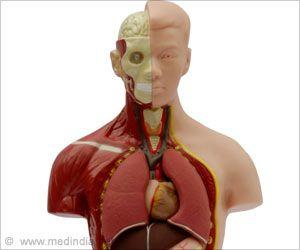Nervous System Suppresses Immune Response During Lung Infections