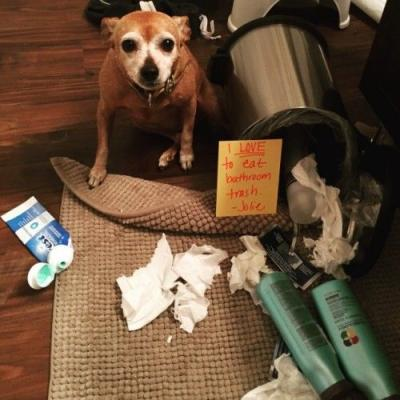 Trash Can Dog Jolie is obsessed with trash, tissues, and dirty