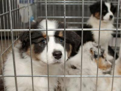 Californa has become the first state to ban sales from puppy mills