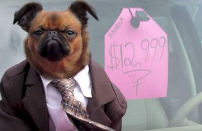 Dog In Business Suit Is The Only Used Car Salesman We Trust