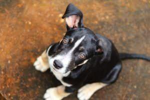 Amazon: Pet Translators Could Be Available Within The Decade