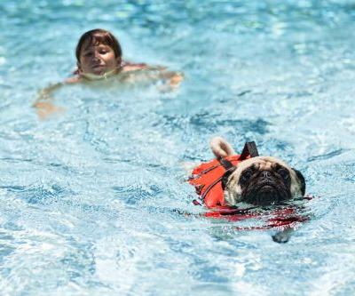 How To Encourage A Reluctant Dog To Swim