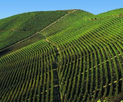 Barolo through the Ages