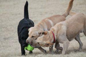 6 Friendly Reminders Everyone Should Follow At The Dog Park
