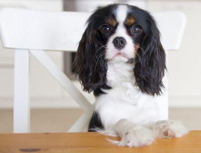 Is Garlic Good or Bad for Dogs?