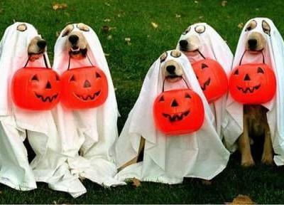 7 Tips to Keep Your Dog Safe on Halloween
