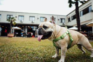 6 Reasons Why Your Dog Should Walk On A Harness Instead Of A Collar