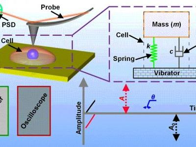 Simultaneous Measurement of Multiple Mechanical Properties of Single Cells Using AFM by Indentation and Vibration