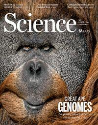 New High-Resolution Genome Assemblies Expand Our Understanding of Human-Ape Differences