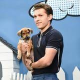I Didn't Know How Much I Needed This Video of Tom Holland Cuddling With Rescue Puppies