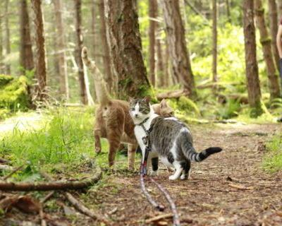 Common Questions About Traveling With Adventure Cats