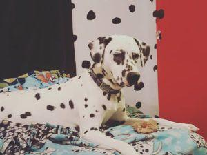 Woman Inspired By Pup Gives Her Home Spots