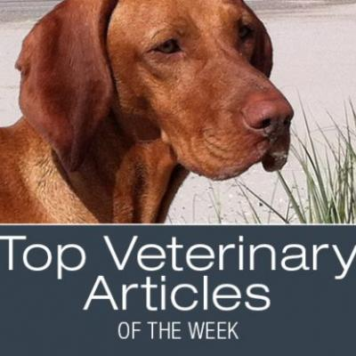 Top Veterinary Articles of the Week: Sudden Blindness in Dogs, Uveitis, and more
