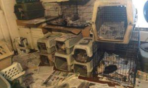 JUST RELEASED: 100 Of The Worst Puppy Mills In The United States