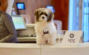 Hotel Foster Program Is Getting Shelter Dogs Adopted In Record Time