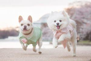 These Engaged Dogs Had Their Photos Taken - And It's Pure Bliss