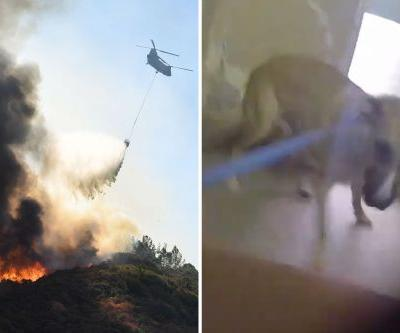 Dramatic video shows rescue of 60 animals during California wildfire