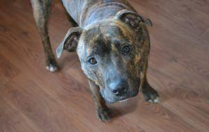 """Coroner's Report On Fatal """"Pit Bull"""" Attack Concludes That Breed Was Not A Factor"""