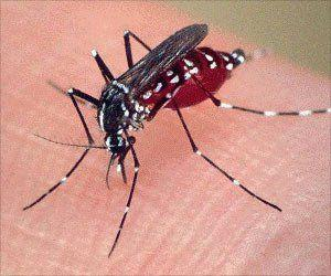 New Targets for an Effective Vaccine for Malaria