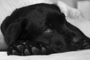 What is Toxoplamosis in Dogs?