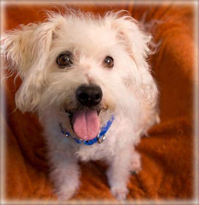 """WANDA"" fun easy-going terrier mix"