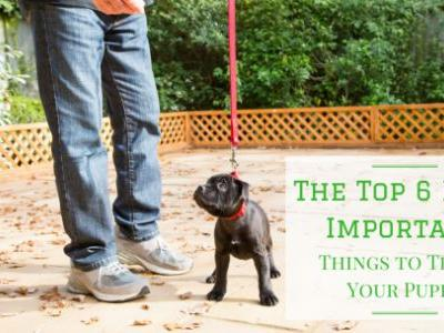 The Top 6 Most Important Things to Teach Your Puppy