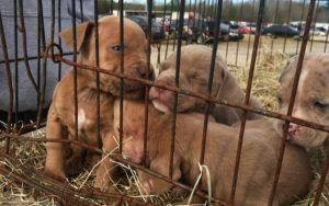This US State Just Put A Ban On Dogs Sold From Puppy Mills