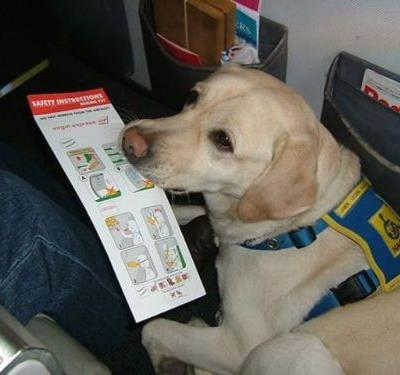 What's The Difference Between Emotional Support, Therapy, And Service Dogs?