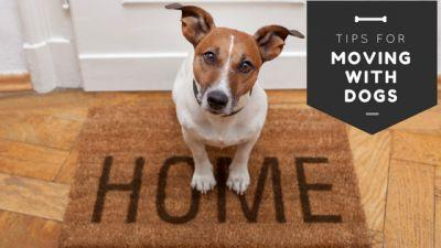 How to Make Moving Easier for Your Dog