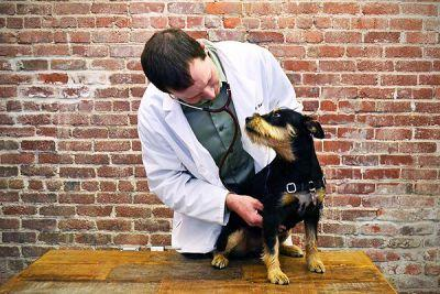 Ask a Vet: What Causes Dog Stomach Noises?