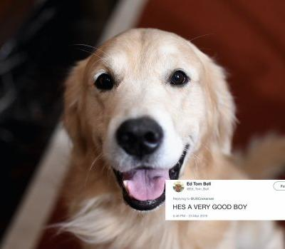 These Tweets About A Dog Who Saved His Family From A Fire Are Sending Love To The Pup