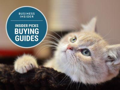 The best cat treats you can buy