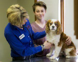 Why Not Vaccinate For Dog Flu