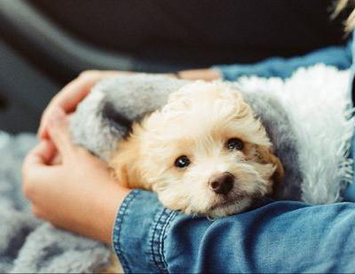 Vet Visit Coming Up? These Tips & Tricks Will Help Your Pet Sail Through