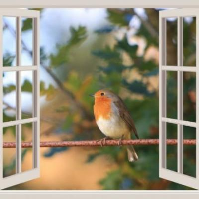 Crash-Proof Glass for Birds
