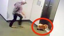 Video Shows Bystander Save Dog With Leash Caught In Elevator Door